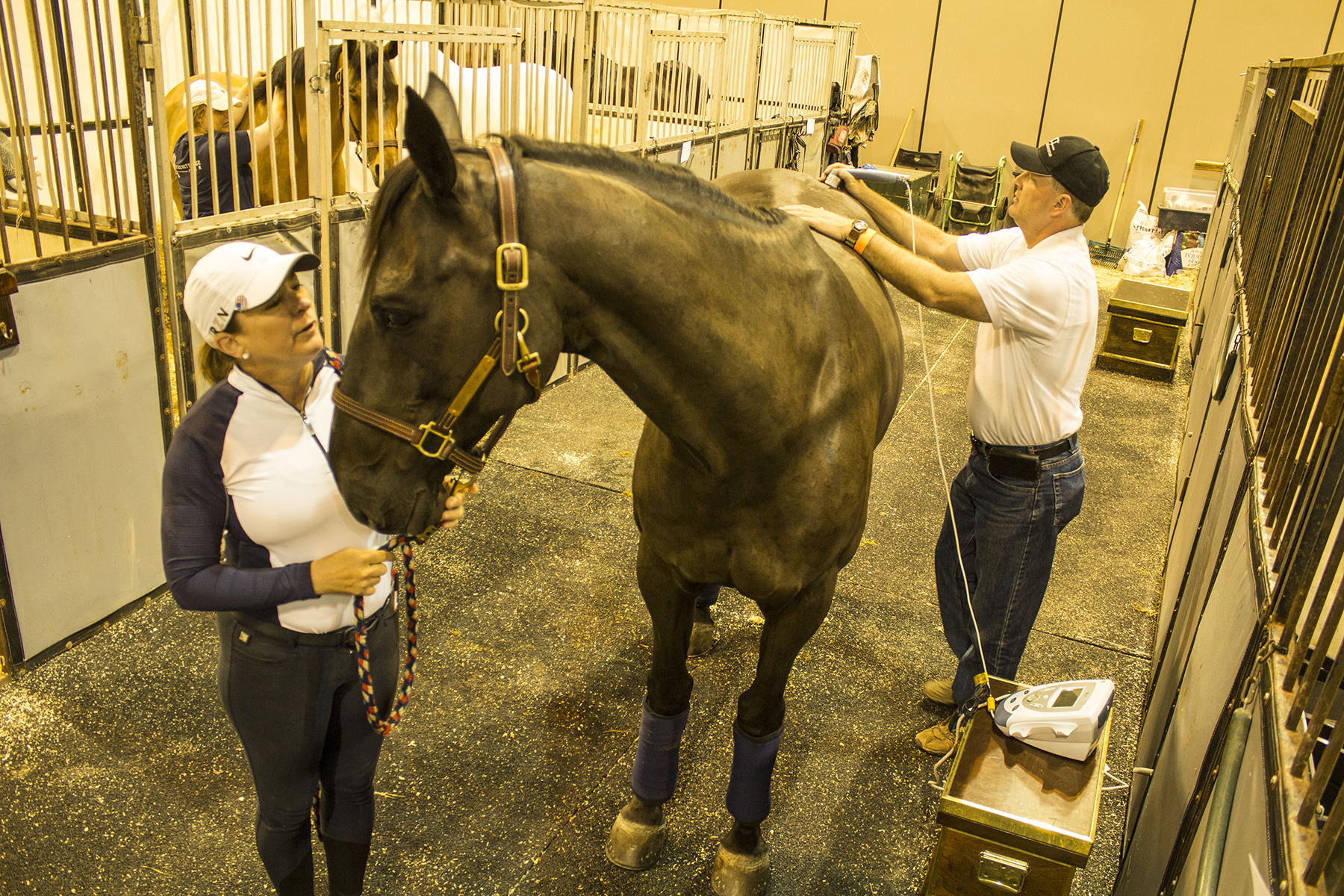 Equine physical therapy - Sharon Classen And Kirk Peck At Work On One Of Classen S Show Jumping Horses