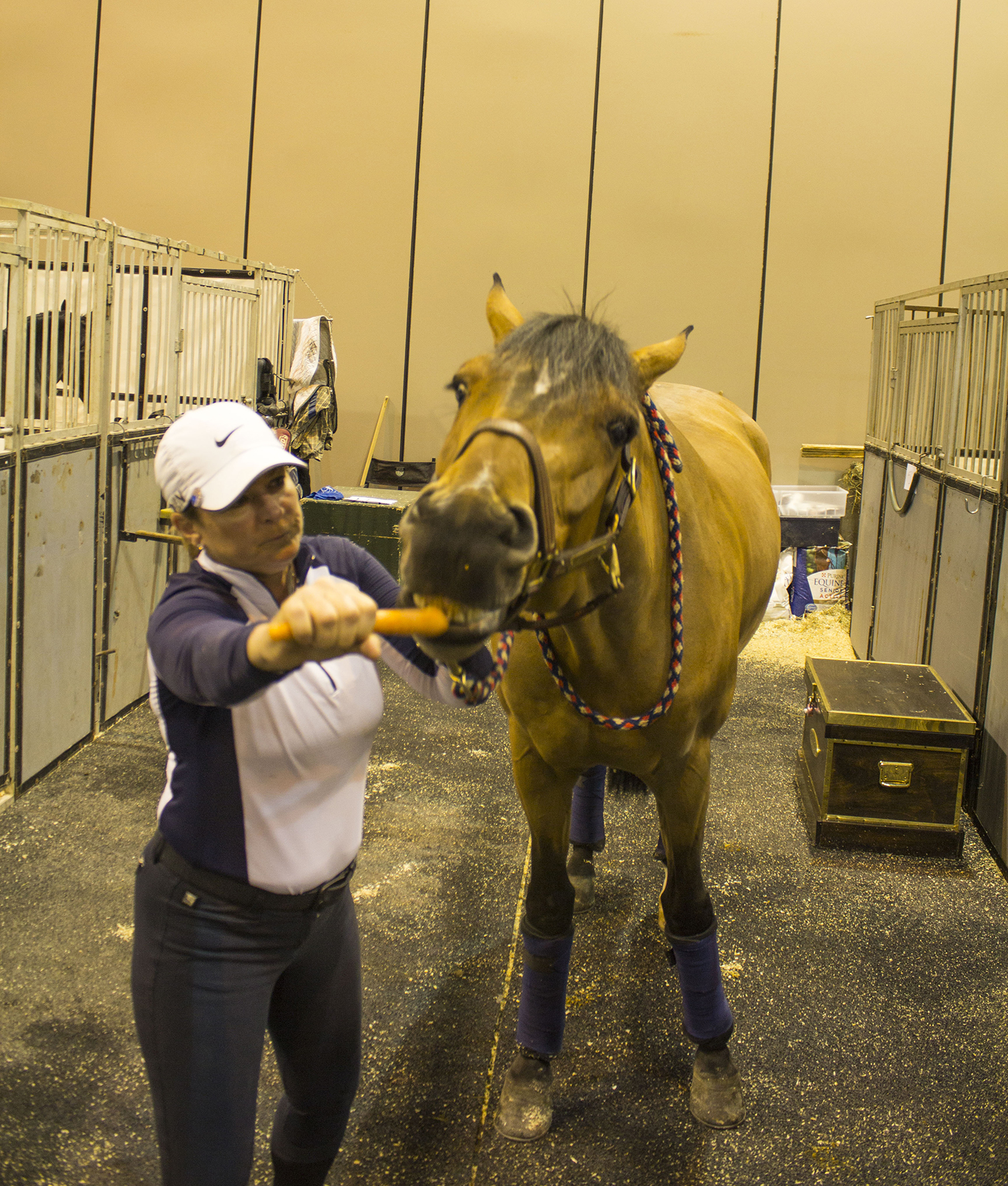 Horse equine physical therapy - Sharon Classen Uses A Carrot To Help A Horse Perform Its Pre Competition Stretching